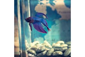 DIY-Aquarium-Fish-Tank